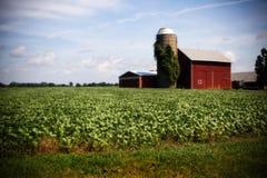 Illinois-Bauernhof Stockbild