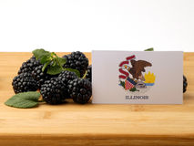 Illinois flag on a wooden panel with blackberries isolated on a Royalty Free Stock Photo