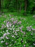 Illinois Forest Scene Royaltyfria Bilder