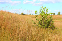 Illinois Grassland Landscape Royalty Free Stock Images