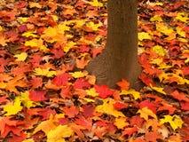 Illinois jesieni lasu krajobraz Fotografia Royalty Free