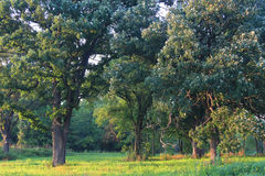 illinois oaksavanna Royaltyfri Foto