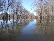 Illinois river. Outdors nature trees royalty free stock photo