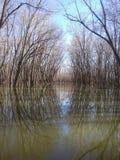 Illinois river. Sunrise outdoors reflection royalty free stock image