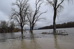 Illinois river out of it`s banks. River is high and boat docks are floating Stock Photography
