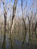 Illinois River. Woods water outdoors royalty free stock photography