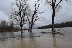 Illinois rzeka z go ` s banki Fotografia Stock