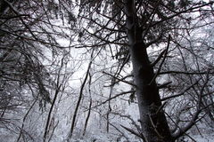 Illinois Sneeuwforest landscape Stock Afbeeldingen