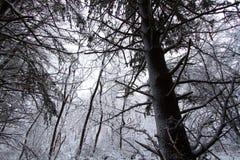 Illinois snöig Forest Landscape Arkivbilder