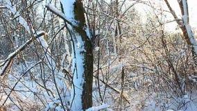 Illinois Winter Scenery stock footage