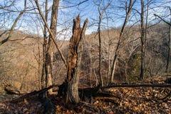 The Illinois Woods. Royalty Free Stock Image