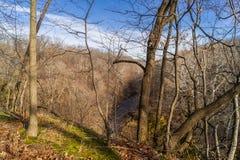 The Illinois Woods. Royalty Free Stock Photo