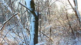 Illinois zimy sceneria zbiory