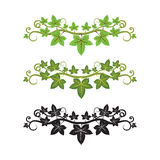 Illlusstration of ivy plant Royalty Free Stock Photos