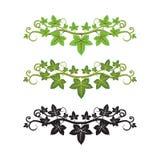 illlusstrationmurgrönaväxt