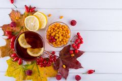 Illness concept: Cup of tea with autumn berries sea buckthorn,  viburnum, rose hip, rowan and fall leaves. Drink with vitamin c Royalty Free Stock Image