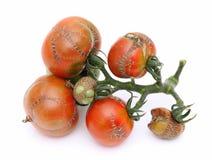 Illness tomato Stock Image