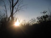 Illuminant. Sunbeam through the plant. Light source gold Royalty Free Stock Photos