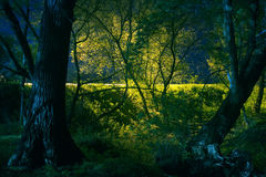 Illuminated branches in park Royalty Free Stock Image