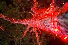 Illuminated Christmas tree light tropic island night bulbs detail close-up up below Stock Image