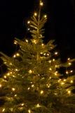 Illuminated Christmas tree, outside shot Stock Images