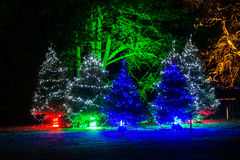 Illuminated Christmas trees in the dark. Many Christmas evergreen trees beautifully decorated with lights are illuminating at night in a pitch dark with Royalty Free Stock Images