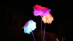 Illuminated colorful flowers in the night stock footage