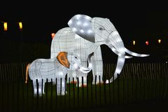 Illuminated Elephants. Arreton, Isle of Wight, United Kingdom - October 20th 2014: Illuminated model elephant and calf in the Electric Woods at Robin Hill Royalty Free Stock Photos