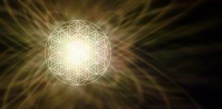 Illuminated Flower of Life Sepia Background Stock Photos