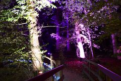 Illuminated Forest Walk. Forest illuminated by coloured spot lights at night Stock Photo