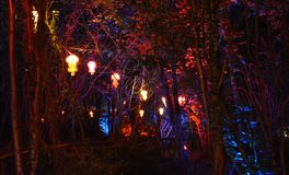 Illuminated Lanterns and Trees. Coloured lanterns illuminate the forest to celebrate Diwali, the traditional Indian `Festival of Lights Royalty Free Stock Photos