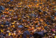 Illuminated leaves. Light beams illuminating leaves on forest floor Royalty Free Stock Photo
