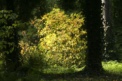 Illuminated leaves in park Stock Photography