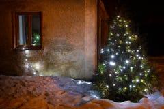 Illuminated x-mas tree lighting in winter garden stock photo
