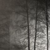Illuminated Naked Leafless Branches, Backlit Misty Trees Silhouettes, Vertical Bright Background Brightly Lit Outdoor Night Scene stock photography