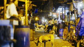 Indian city. Illuminated old indian market with many domestic animals shoting on tilt-shift lens at night time stock video footage
