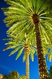 Illuminated palm trees at a street Royalty Free Stock Images