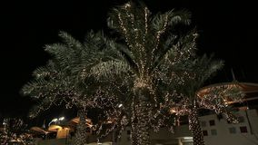 Illuminated Palms at a Street. A number of palm trees at night. Palm trees are illuminated by lights in the dark in Bahrein stock video