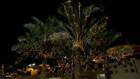 Illuminated palms at a street. A number of palm trees at night. Palm trees are illuminated by lights in the dark in Bahrein stock footage