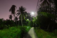 Illuminated path through the night jungle. In Asia in tropics stock images