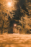Illuminated pathway in snowbound forest by night Royalty Free Stock Image