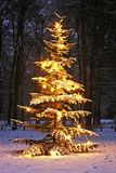 Illuminated snowy christmas tree. In the woods at night Royalty Free Stock Photos