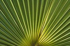 Illuminated solar light palm leaf Royalty Free Stock Image