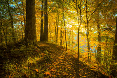 Illuminated Trail - Horizontal royalty free stock photo