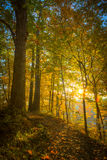 Illuminated Trail - Vertical. A view of early morning sun above Cuyahoga Valley National Park Stock Photo