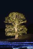 Illuminated tree Royalty Free Stock Photos
