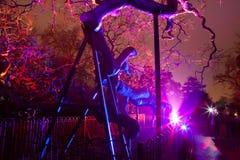 illuminated tree Στοκ Εικόνες