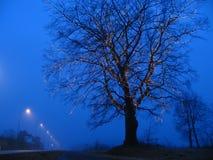 Illuminated tree stock photography