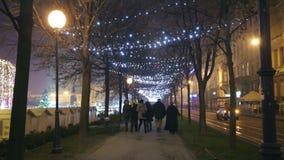 Illuminated tree alley stock video