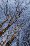 Illuminated tree Stock Photo